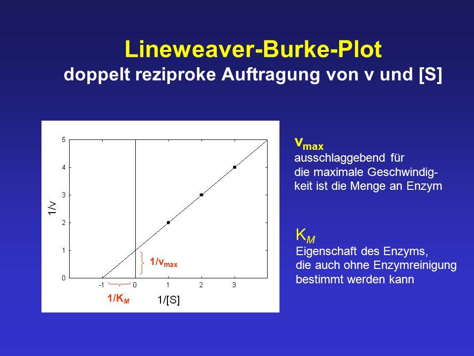 Lineweaver-Burke-Plot doppelt reziproke Auftragung von v und [S]